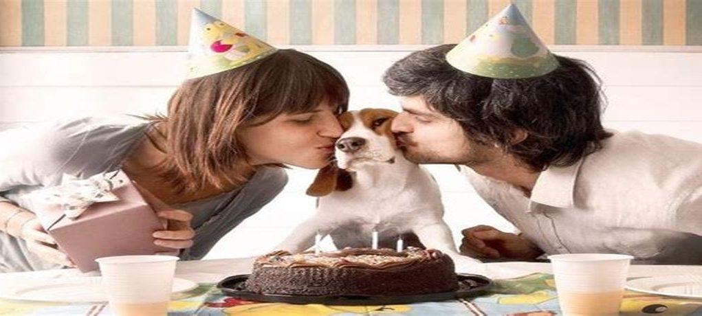 ¿Eres amante de los animales? ¡No te puedes perder estas importantes redes sociales curiosas!